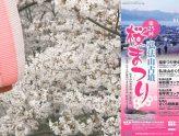 桜まつりについて
