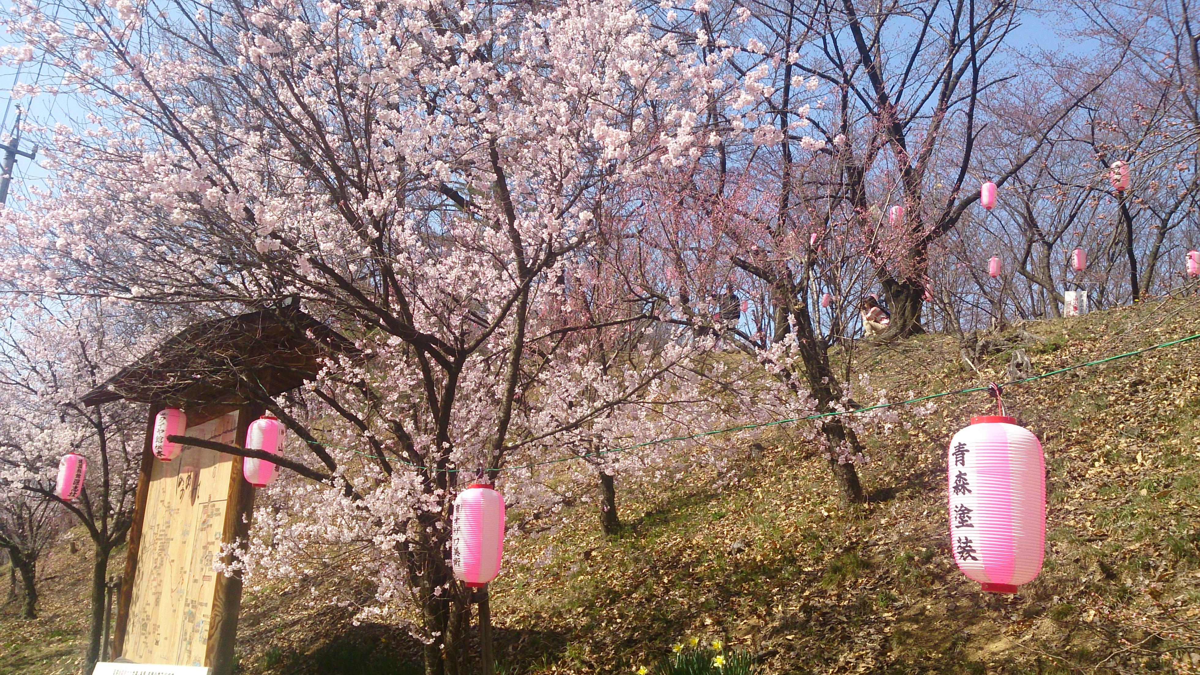 桜まつり開催!