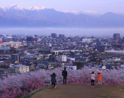 「弘法山桜写真コンクール」一般公募 募集要項