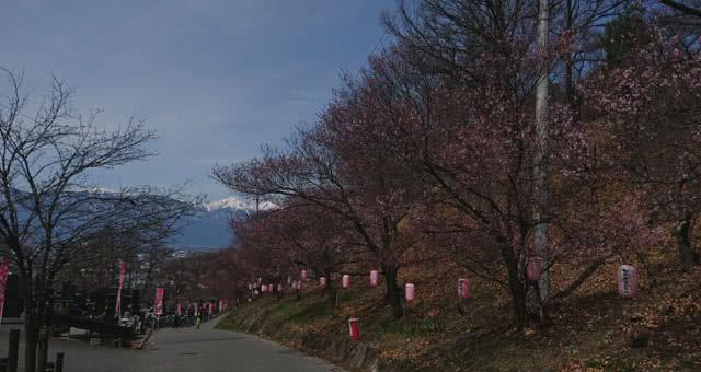 弘法山ライトアップ
